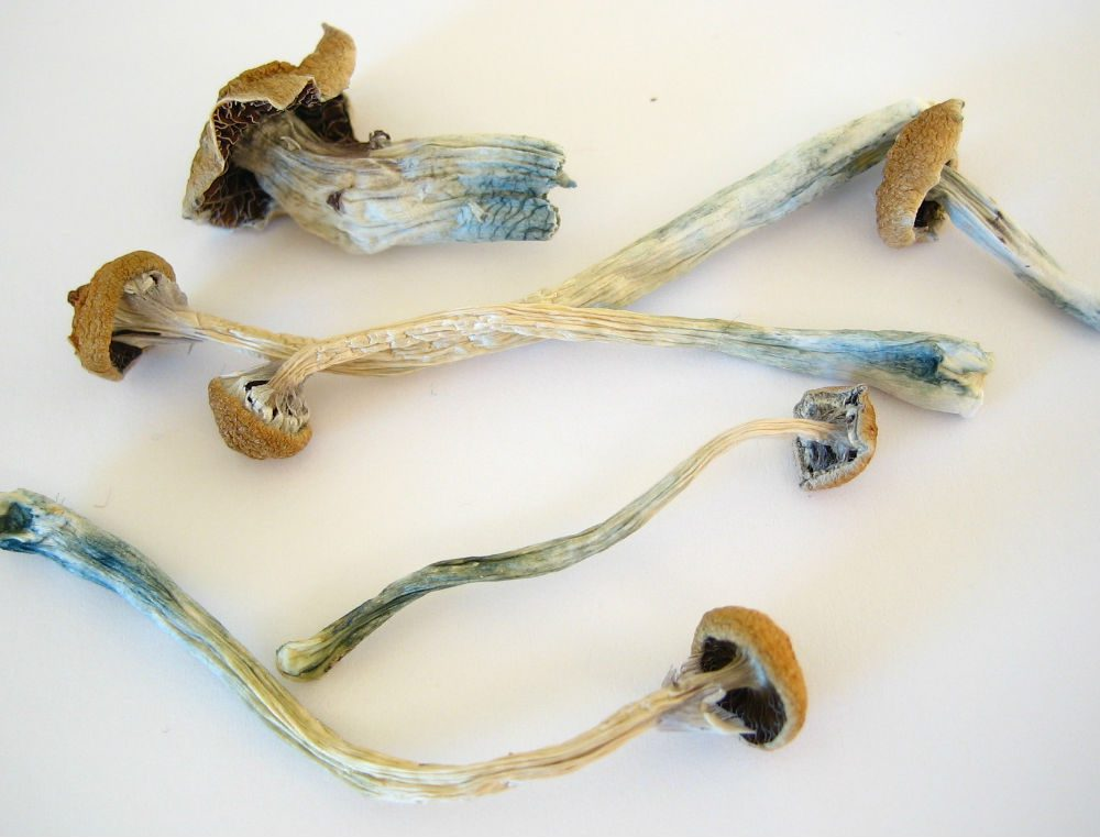 mushrooms - shrooms - drug